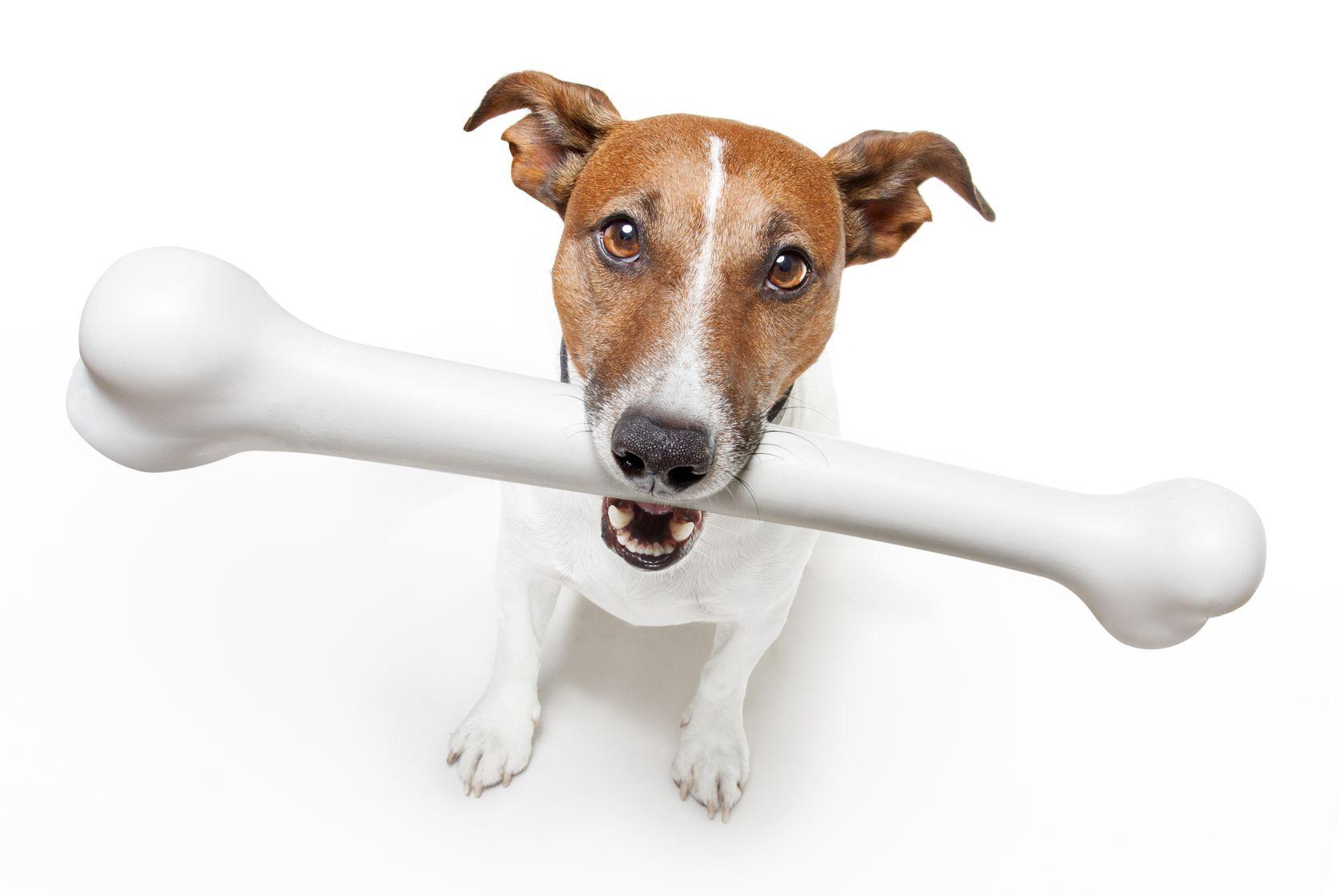 Help With Dog Vet Bills Uk