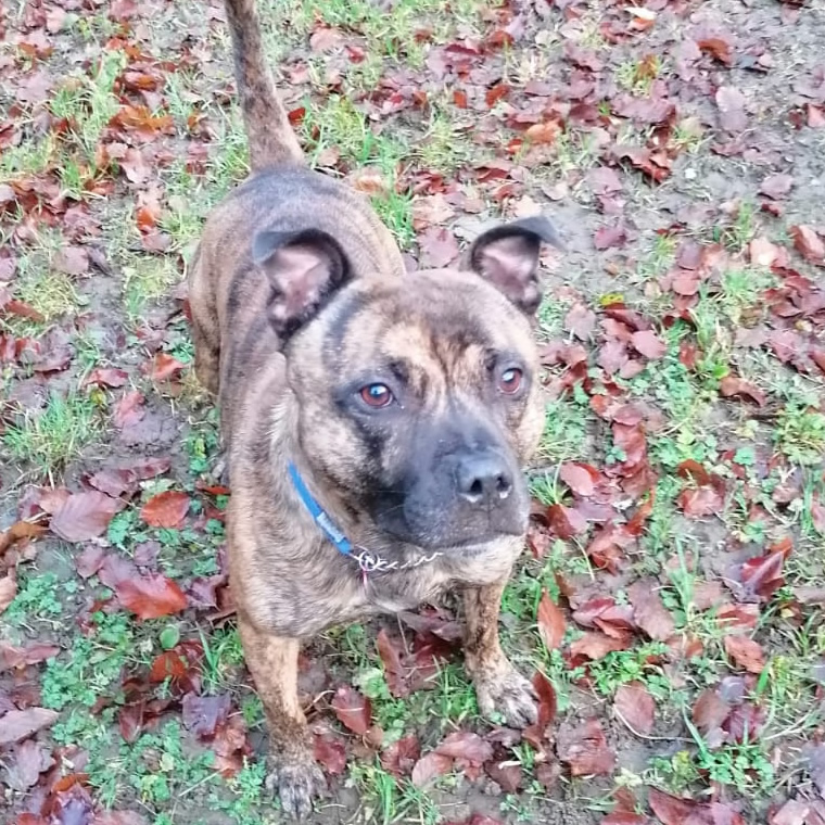 Sheffield Dog Rescue Image